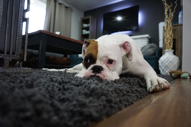 How to Identify Pet Damage in Your Rental Property